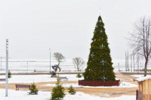 Kalėdų Eglutė Nidoje