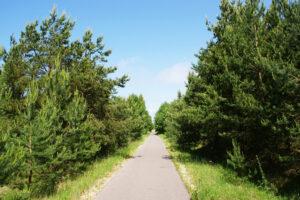 Palangos dviračių takai - Nemirsetos dviračių takas
