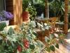 Apartamentų ir kambarių nuoma Palangoje Holiday in Palanga - 14