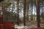 One room apartment with amazing view to the pine forest in Nida, Curonian spit, Lithuania - 2