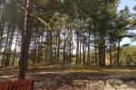 One room apartment with amazing view to the pine forest in Nida, Curonian spit, Lithuania