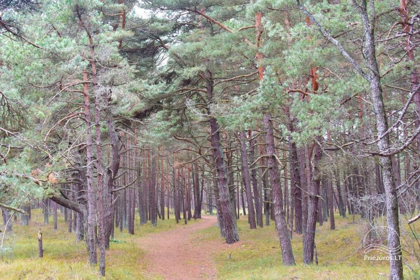 Villa DIA - Apartments for rent in Palanga, next to the pine forest - 6