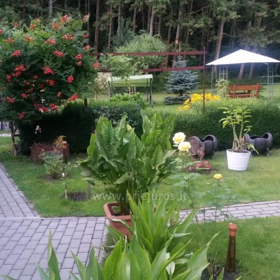 Ventė Šturmų sodyba - poilsio namelis, apartamentai, studio apartamentai, kavinė