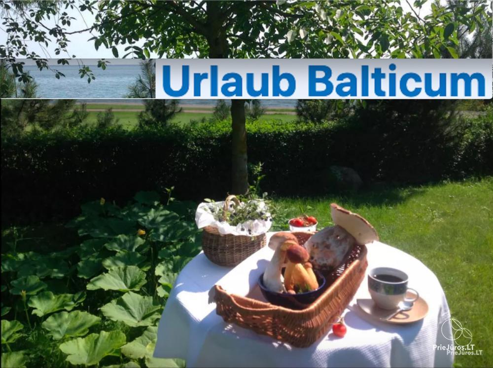 Nuoma Juodkrantėje prie Baltijos jūros. Butas autentiškame, istoriniame name, iš kiemelio - vaizdas į marias. - 1