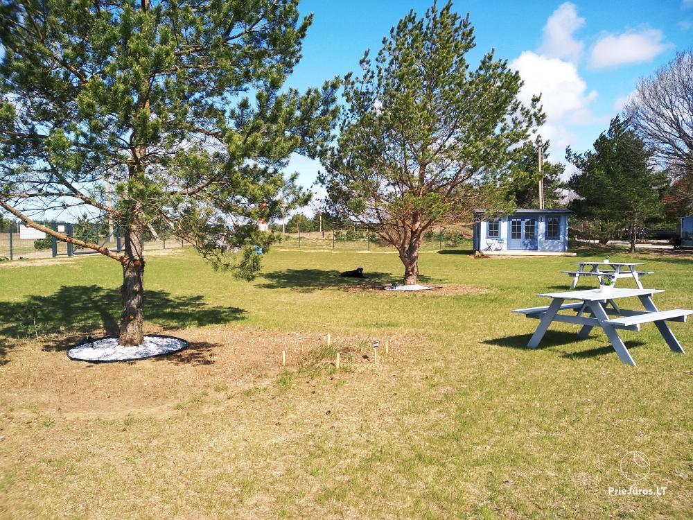 Sea Paradise Surf Farm and Camping - 10
