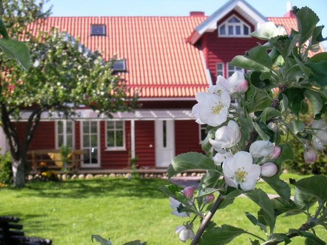 Apartments in Palanga in private guest house - homestead OBELYNE