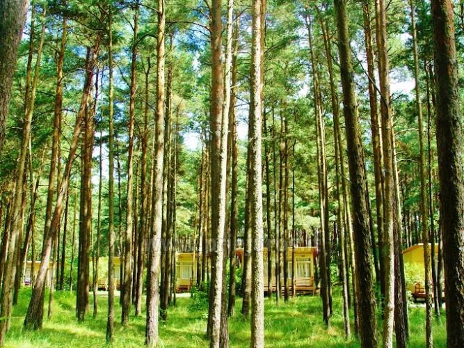 Mediniai nameliai Šventosios pušyne ir prie bažnyčios