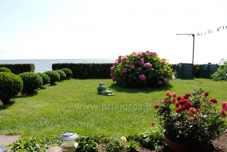 One-room apartment and double room in Nida in a house on the shore of the Curonian lagoon - 2