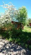 Nauji nameliai ir kambariai su patogumais Šventojoje ŽYDROJI LIEPSNA - 37