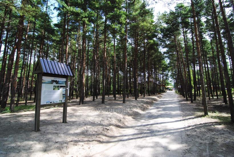 Holiday houses GENIO NAMUKAI for rent in Palanga - 22