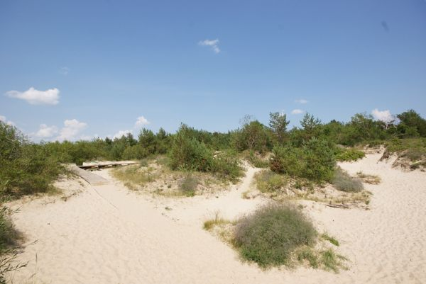Dunes - just a few steps from the guest house!
