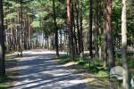 Holiday rooms for rent in Palanga - 11