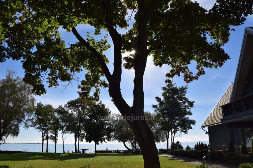 Wohnung mit Terrasse und Blick auf die Lagune in Kurische Nehrung - 8