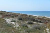 Kuršių Nerijos paplūdimiai ir kopos - 5
