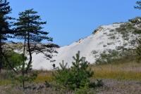 Kuršių Nerijos paplūdimiai ir kopos - 6