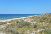 Kuršių Nerijos paplūdimiai ir kopos - 20