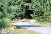Dviračių takas pajūryje Šventoji - Palanga - Karklė - 65