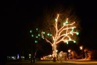Ziemassvētku eglīte Nidā, Juodkrante - 38