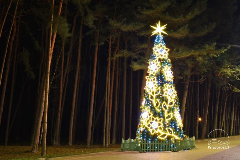 Real Christmas Trees Decorated.Christmas Tree In Palanga And Sventoji Balticseaside Lt