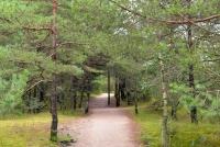 Naglių gamtinis rezervatas, pažintinis takas - 20