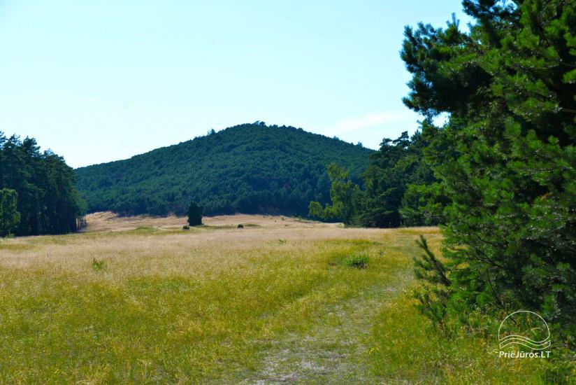 Vecekrugas dune in Curonian spit - 1