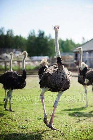 Mini zoo parks, safari Kārkle viesnīcā Gamtos Perlas *** - 18