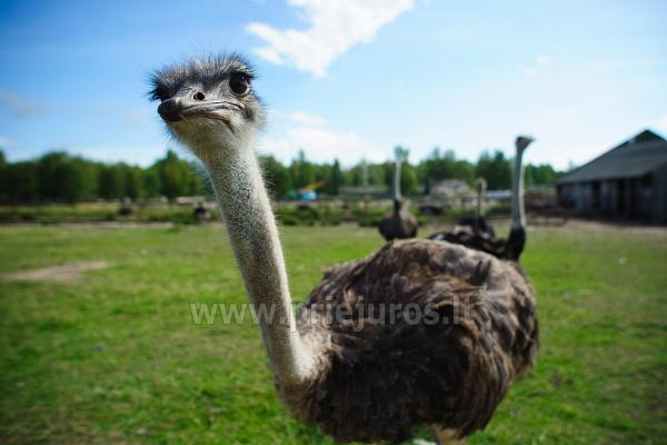Mini zoo parks, safari Kārkle viesnīcā Gamtos Perlas *** - 19