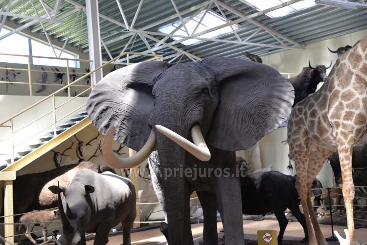 Mini Zoo, safari in Klaipeda Bezirk in Hotel Gamtos Perlas *** - 1
