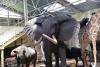 Mini zoosodas, safaris, iškamšų muziejus Karklėje viešbutyje Gamtos perlas *** - 1
