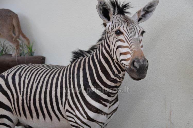 Mini zoo parks, safari Kārkle viesnīcā Gamtos Perlas *** - 7