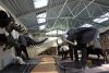 Mini zoosodas, safaris, iškamšų muziejus Karklėje viešbutyje Gamtos perlas *** - 4