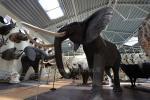 Mini Zoo, safari in Klaipeda Bezirk in Hotel Gamtos Perlas *** - 2