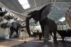 Mini zoosodas, safaris, iškamšų muziejus Karklėje viešbutyje Gamtos perlas *** - 2