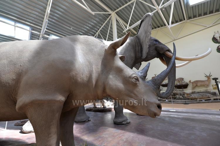 Mini zoo parks, safari Kārkle viesnīcā Gamtos Perlas *** - 6