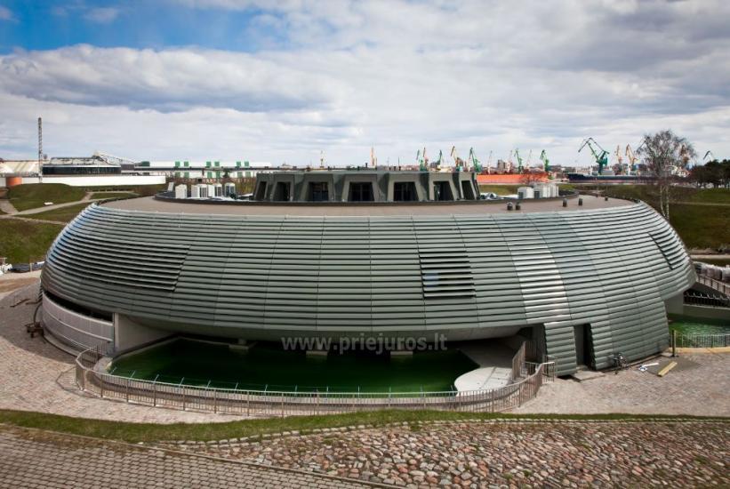 Lietuvos jūrų muziejus - Delfinariumas - 15
