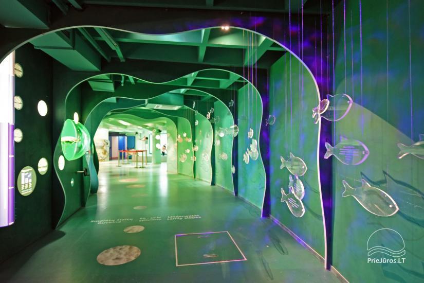 Litauisches Meeresmuseum - Delphinarium in Klaipeda - 6