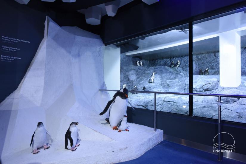 Litauisches Meeresmuseum - Delphinarium in Klaipeda - 7