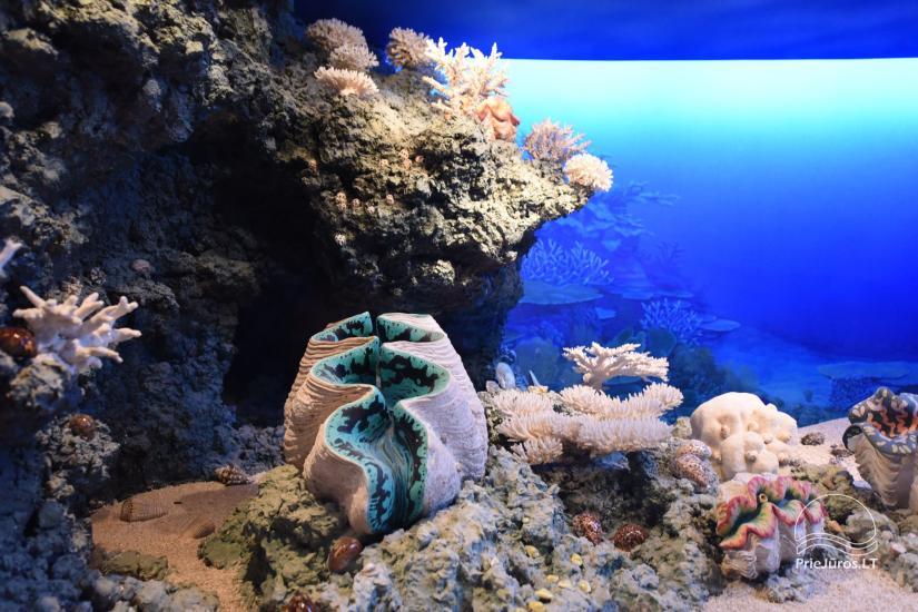 Litauisches Meeresmuseum - Delphinarium in Klaipeda - 17
