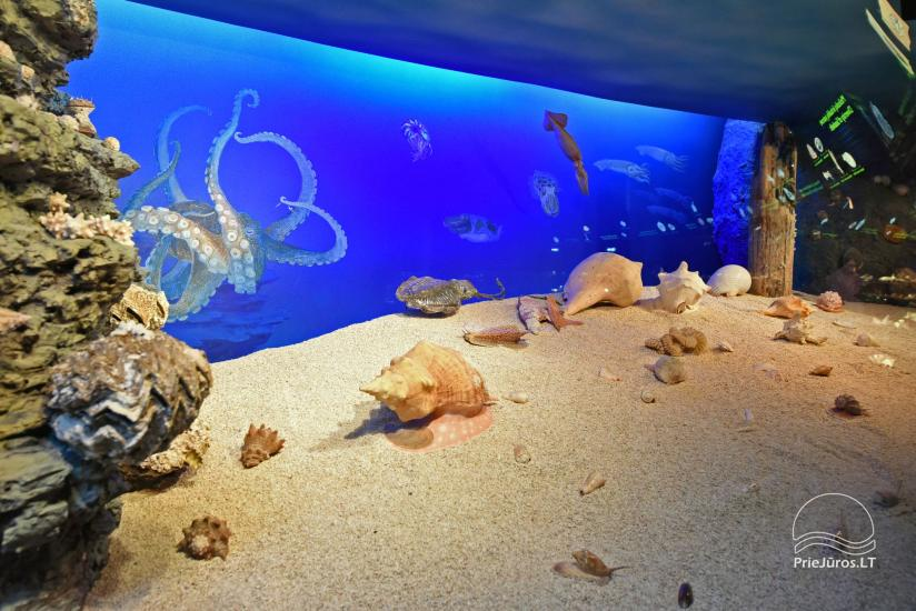 Litauisches Meeresmuseum - Delphinarium in Klaipeda - 18