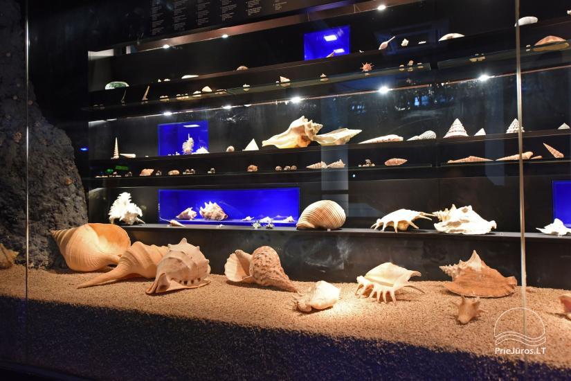 Litauisches Meeresmuseum - Delphinarium in Klaipeda - 19