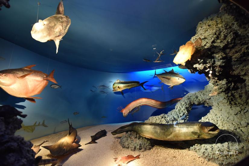 Litauisches Meeresmuseum - Delphinarium in Klaipeda - 20