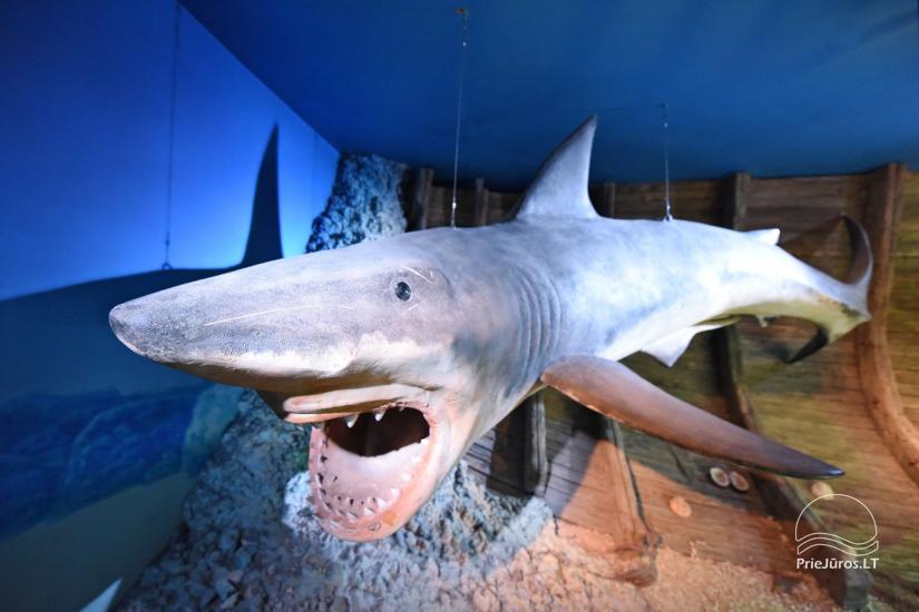 Litauisches Meeresmuseum - Delphinarium in Klaipeda - 22