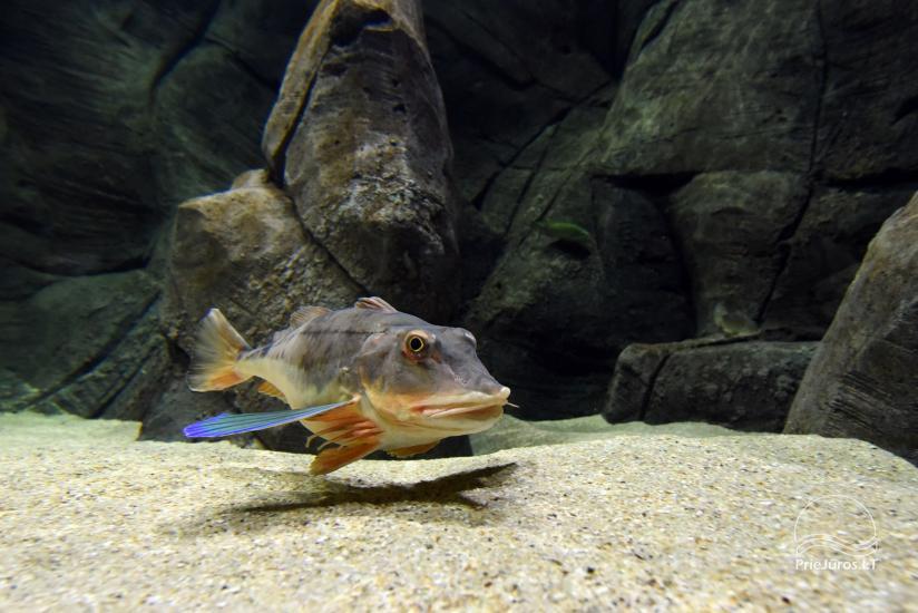 Litauisches Meeresmuseum - Delphinarium in Klaipeda - 25
