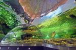 Lietuvos jūrų muziejus - Delfinariumas - 2