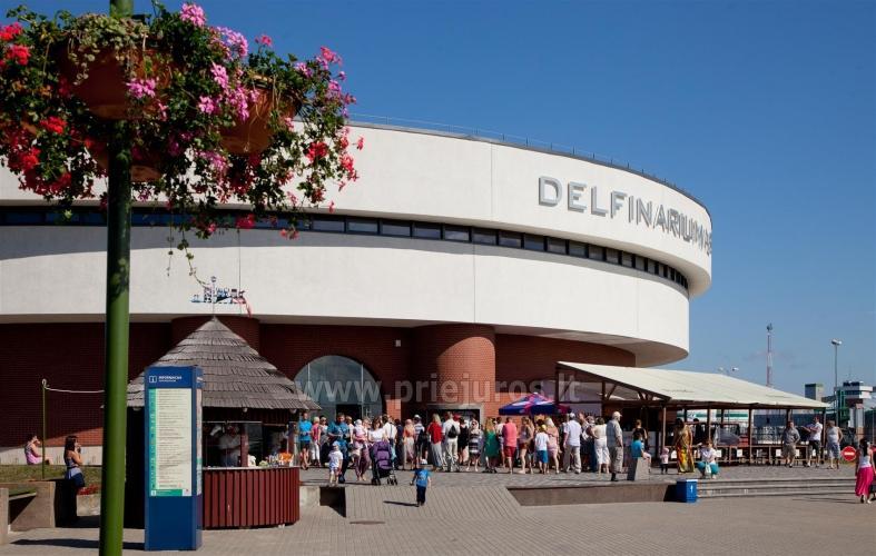 Lietuvos jūrų muziejus - Delfinariumas - 16