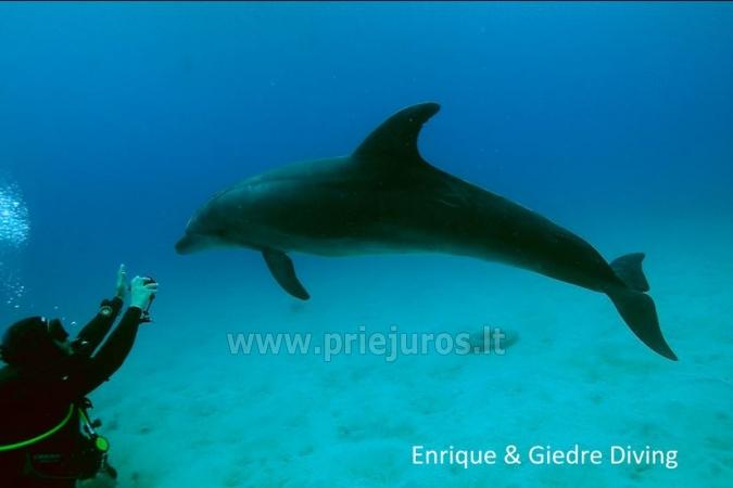 Diving in Tenerife - 6