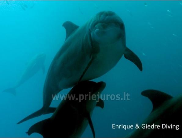 Diving in Tenerife - 7