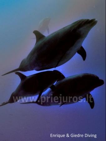 Diving in Tenerife - 8