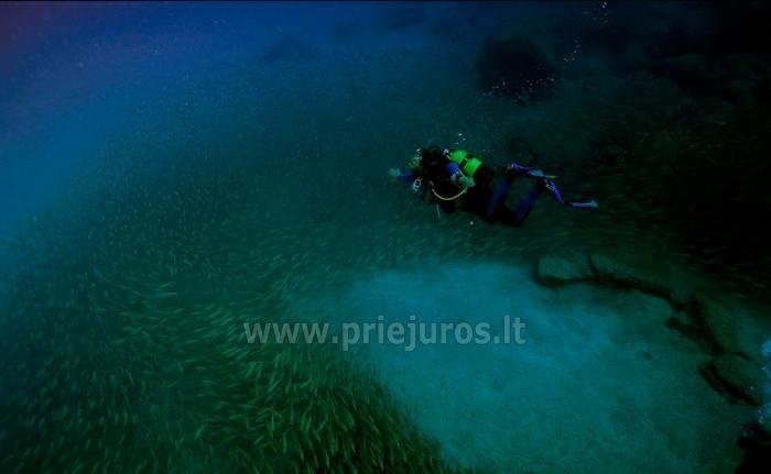 Diving in Tenerife - 9