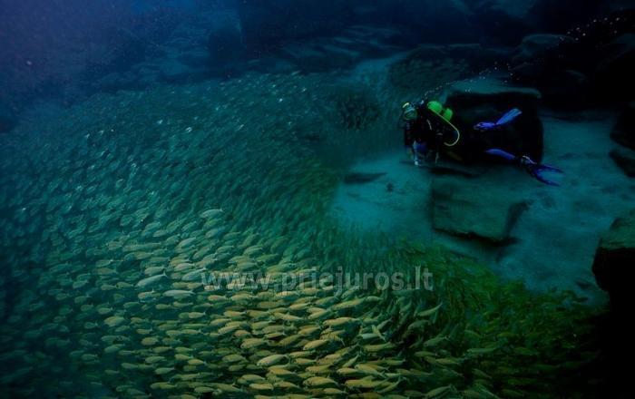 Diving in Tenerife - 10